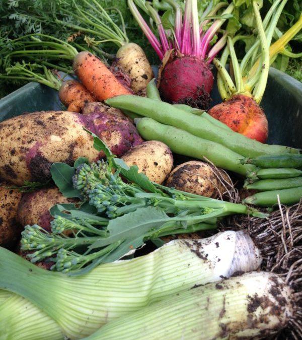 Fruit and Vegetable Harvest